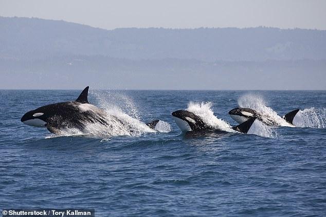 Noi e le Orche Assassine
